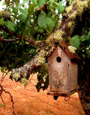 Home in the Old Plum Tree